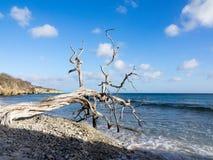 Дерево смещения Стоковые Изображения RF
