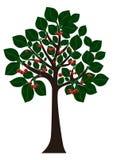 Дерево с листьями и вишнями зеленого цвета Стоковые Фото