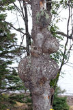 Дерево с проблемой Стоковые Изображения RF