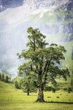 Дерево с дымом в горных вершинах Стоковая Фотография