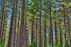 Деревья в лесе Стоковая Фотография RF