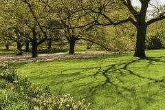 Деревья, заводы, ботанический сад, Нью-Йорк Стоковые Фотографии RF