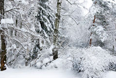Деревья зимы покрытые с снегом в лесе. Стоковое фото RF