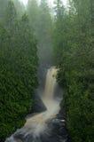 Деревья кедра и водопад Стоковое Фото