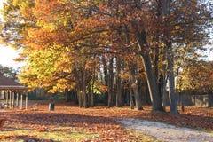 Деревья осени на парке Стоковая Фотография