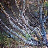 Деревья Стоковая Фотография RF