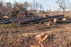 Деревья Cutted Стоковая Фотография RF