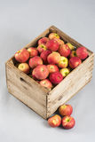 Деревянная клеть с яблоками Стоковое Изображение RF