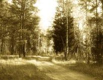Деревянная дорога Стоковое Изображение