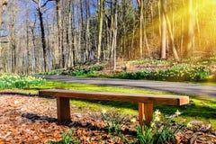 Деревянная скамья в солнечном парке весны Стоковое Изображение RF