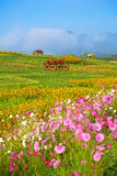 Деревянная тележка в саде фермы Rawd кострики Стоковая Фотография RF
