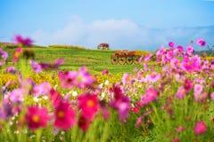 Деревянная тележка в саде фермы Rawd кострики Стоковое Изображение