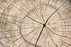 Деревянный ствол дерева отрезка текстуры Стоковые Изображения
