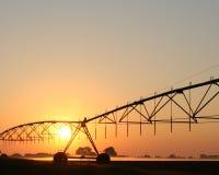 дерновина восхода солнца фермы Стоковые Фото