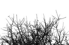 деталь ветвей Стоковая Фотография