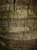 Деталь ладони кокоса Стоковое Изображение