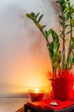 Зеленый завод в баке с светом горящей свечи Стоковое фото RF