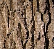 Деталь коры дерева Стоковые Фотографии RF