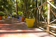 Деталь сада Majorelle (домашняя Yves St Laurent) Стоковые Фото