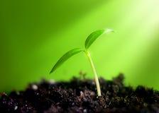 детеныши ростка Стоковые Фото