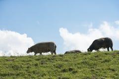 Детеныши устрашают на зеленой траве Стоковая Фотография RF