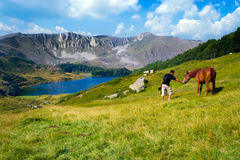детеныши человека лошади Стоковая Фотография