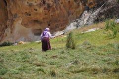 деятельность женщины сторновк поля деревенская Стоковые Изображения RF