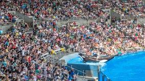 Дельфин-касатка на этапе Стоковое фото RF