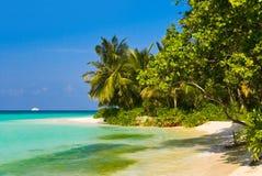 джунгли пляжа тропические Стоковая Фотография