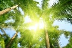 джунгли Таиланд Стоковое Изображение