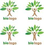 Диаграмма дерева логотипа зеленая Стоковое фото RF