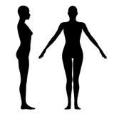 диаграмма женщина Стоковая Фотография