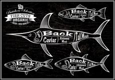 Диаграмма отрезала семг туш, меч-рыб, сельдей, тунца Стоковое Изображение