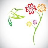 Дизайн вектора колибри и цветков Стоковые Изображения
