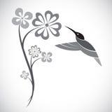 Дизайн вектора колибри и цветков Стоковые Фотографии RF