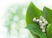 Дизайн цветков ландыша Стоковые Изображения RF
