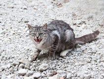 дикая кошка Стоковое фото RF