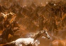 Дикие лошади Стоковые Изображения RF