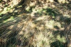 Длинная трава в луге Стоковое фото RF