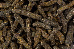 Длинный перец (longum волынщика) Стоковое Фото