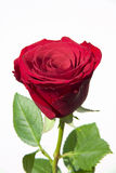 длинний розовый стержень Стоковые Фотографии RF
