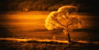 дни солнечные Стоковая Фотография RF