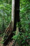 Дождевой лес Стоковые Фотографии RF