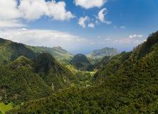 дождевый лес Стоковое Изображение