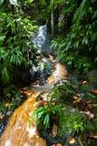 дождевый лес Стоковая Фотография RF