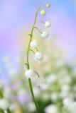 долина лилии Стоковые Изображения