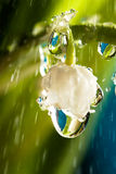 долина дождя лилии Стоковые Изображения RF