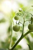 Домашний расти Стоковое Изображение