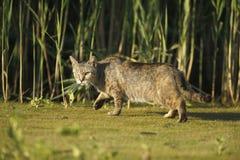 Домашняя кошка Стоковые Фото