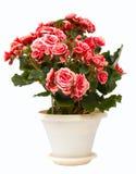 дом цветка Стоковые Фотографии RF